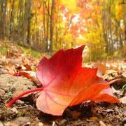enfermedades-otoño