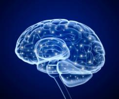 cerebro-ilustracion