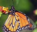 1 Naturalista una herramienta de ciencia donde capturas, conoces y compartes la naturaleza int1
