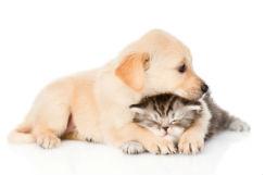 mascota-cachorro-i