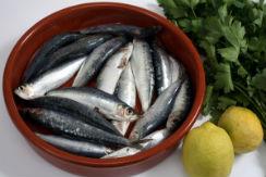sardinas-i