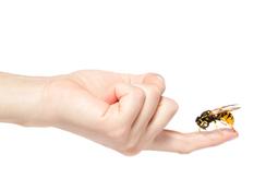 i-picadura-insecto