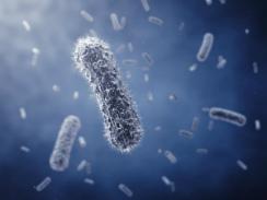 bacterias-I