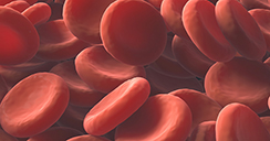 globulos rojos.2