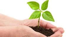 reforestemos.2