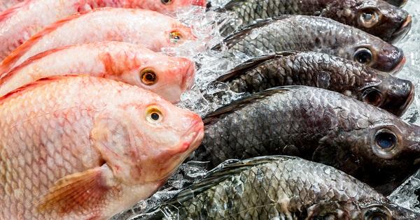 tips-pescado-fresco